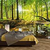 murimage Fototapete Wald 366 x 254 cm inklusive Kleister Bäume Holz Sonne Natur Schlafzimmer...