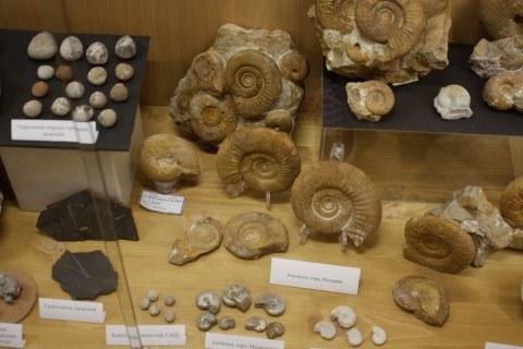 artec_3d_und_threeding_digitalisieren_palaeontologie-sammlung_2-mobile