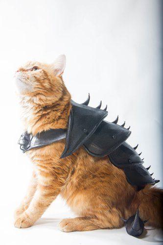 3d model cat armor 3d-modell katzen rüstung
